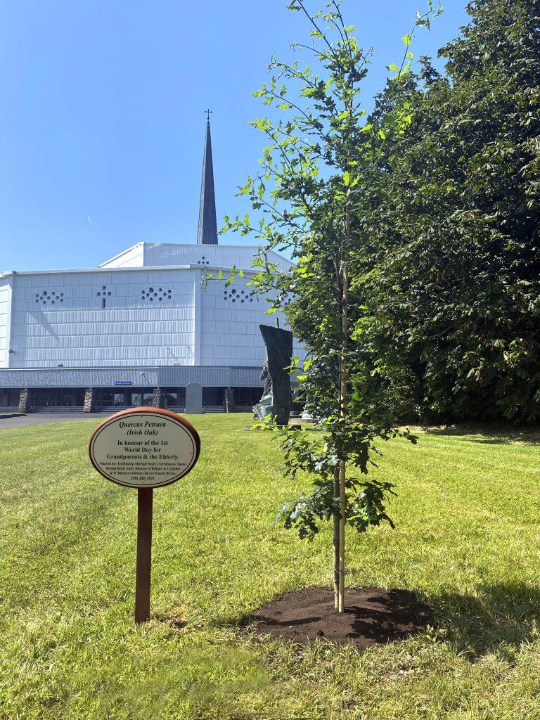 8. An Irish Oak Tree at Knock Shrine 3 (See file info)